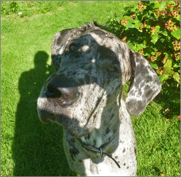 """Me and my shadow\"" by JuBarney"
