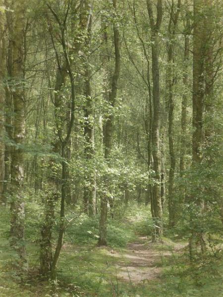 Waldeinsamkeit by Philip_H