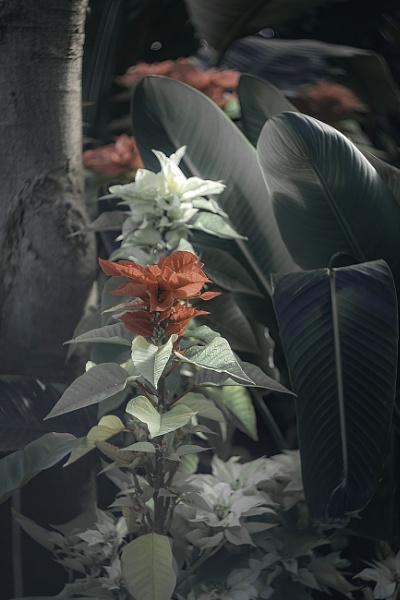 Blossom Moment by manicam