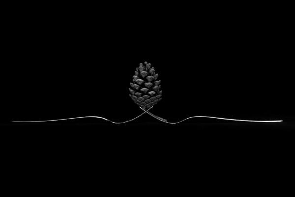 Pinefork by mdc0ffey