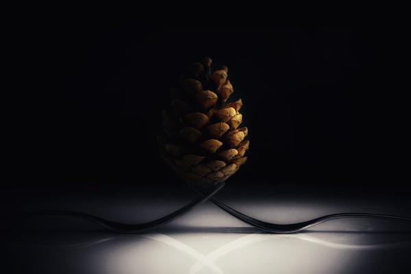 Pine Cone on Forks by mdc0ffey