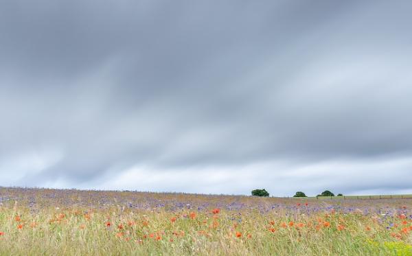 Wildflowers by trusth