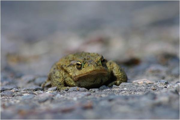 Mr Grumpy by johnriley1uk
