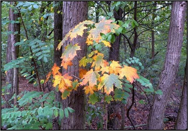litle fall tree by FabioKeiner