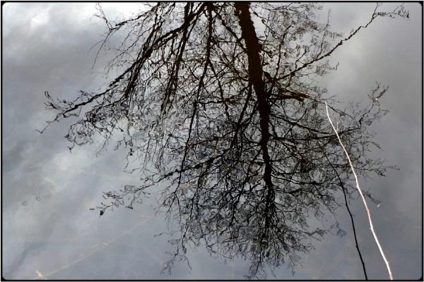 watertree by FabioKeiner