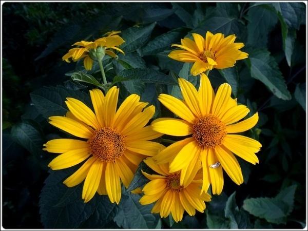 5 little yellow flowers by FabioKeiner