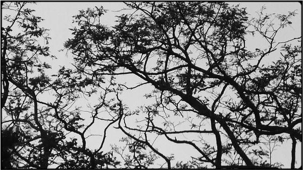 evening branches by FabioKeiner