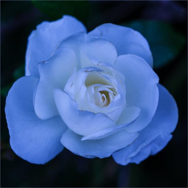 moonlit blue... by estonian