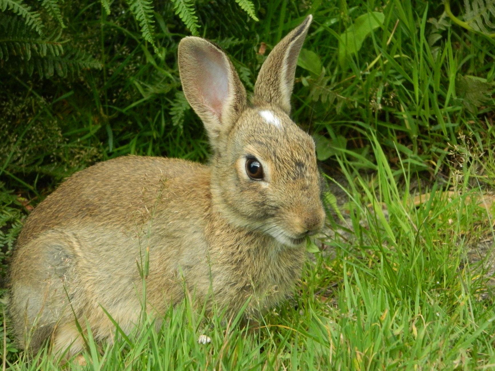Wild Cute Rabbit