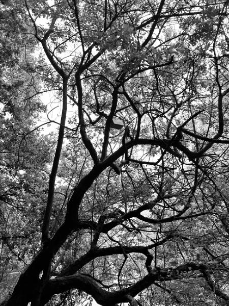 Tree by KrazyKA