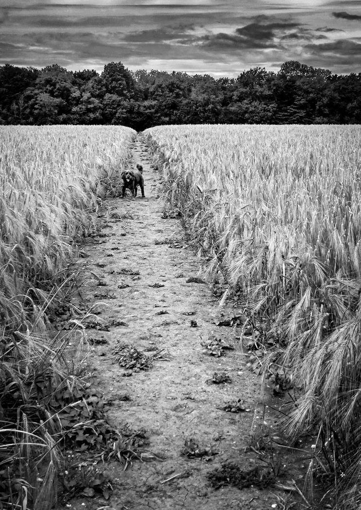 Barley and Charlie
