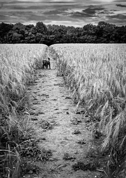 Barley and Charlie by AlfieK