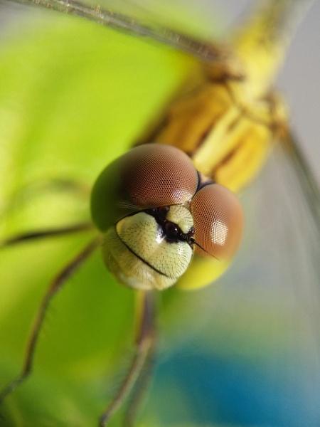 Close up by Nirmallya