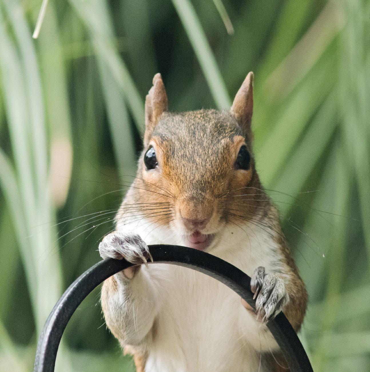 Mad or happy squirrel?