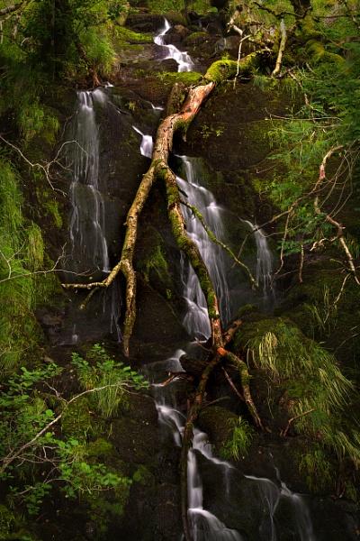 Fallen tree. by Brenty