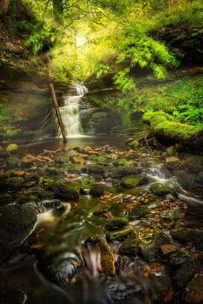 Hidden Beauty by douglasR