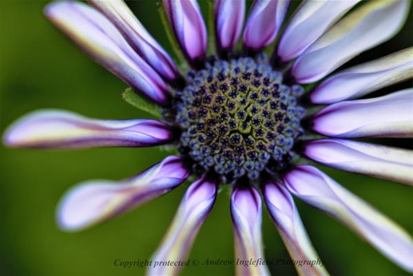 Garden Colours by Ingleman