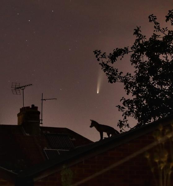 Fox under comet by gmills60