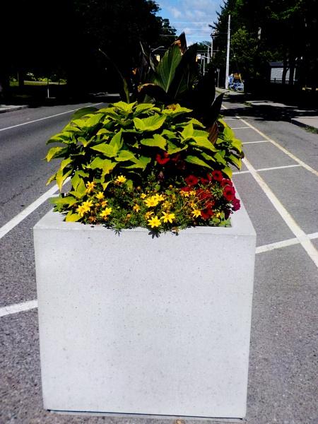 FLOWER POT ON HERKIMER OPPOSITE THE DURAND PARK by TimothyDMorton