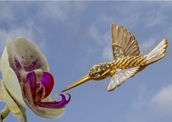 Hmmmm ! Bird by jcolind