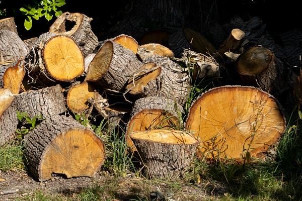 Stack of freshly sawn logs by Wilderness Lake in Tandridge by Phil_Bird