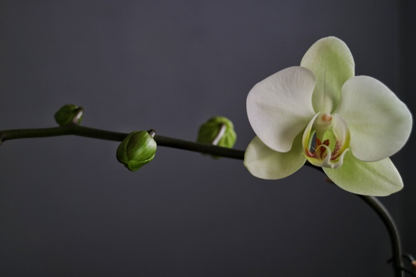 Orchid by wisk