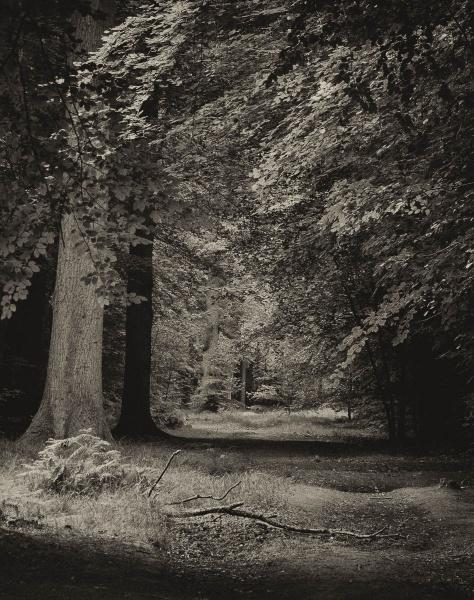 Woodland Path by RolandC