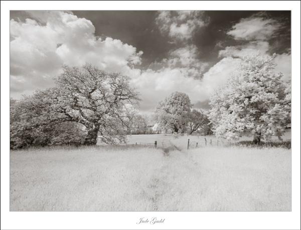 The Meadow by DalesLass