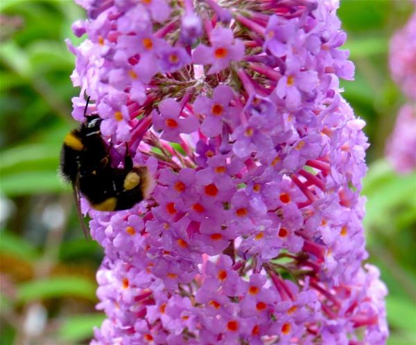 Bee by ddolfelin