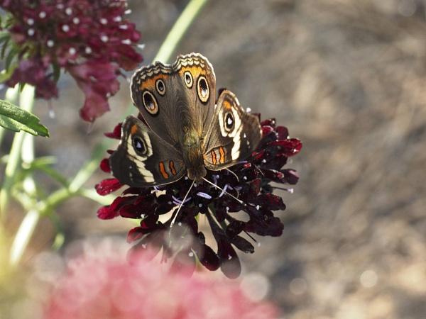 Butterflies by handlerstudio