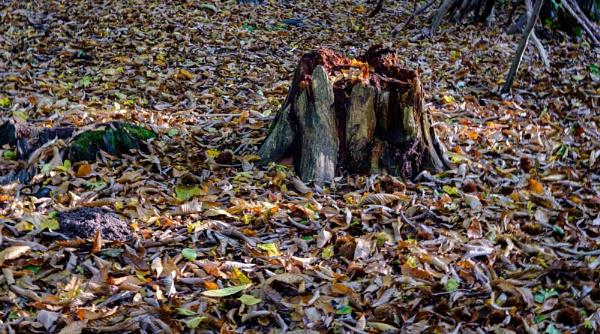 The Stump by Nikonuser1