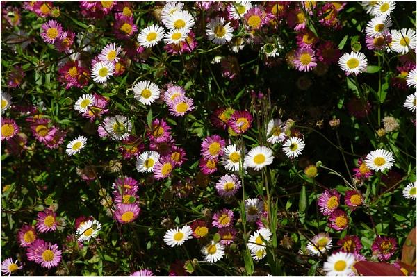 Flower Meadow by johnriley1uk