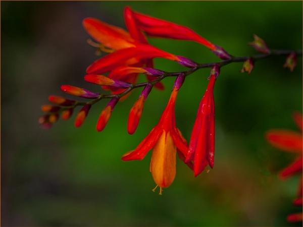 red to orange... by estonian