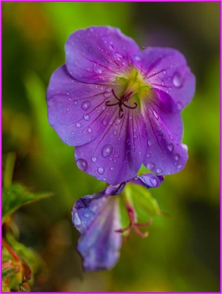 rain at last... by estonian