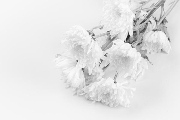 High key bouquet by BiffoClick