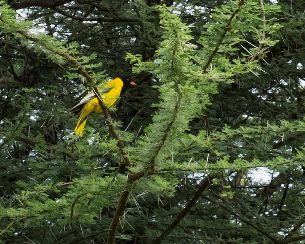 African Sunbird - Ethiopia by barryyoungnz