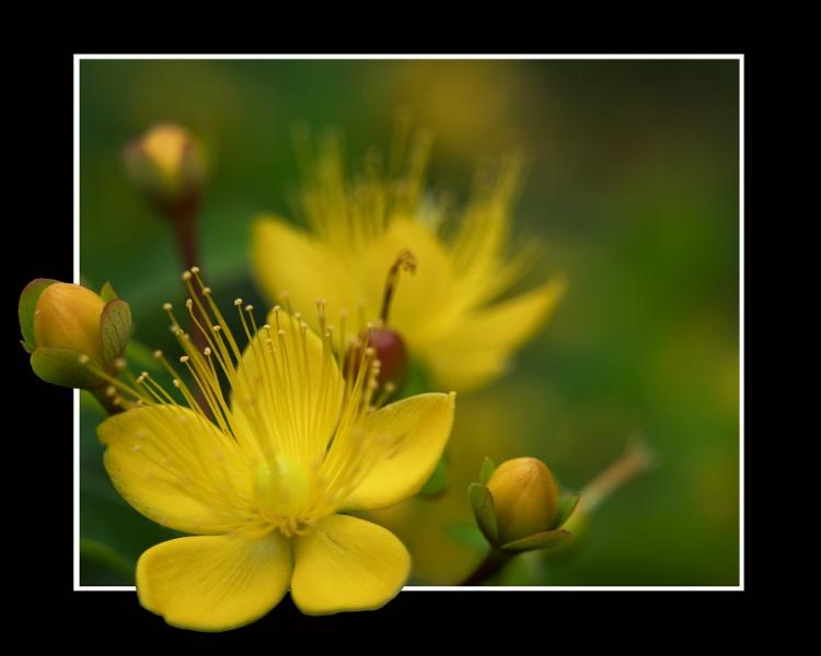 Blooming St John