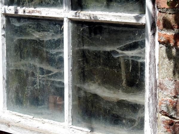 Cobwebs by Alan26