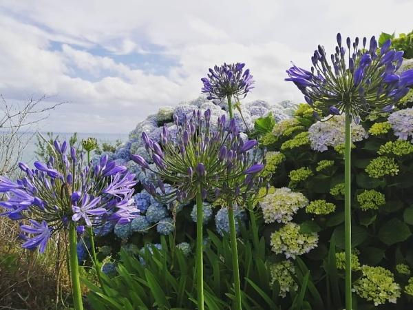 Coastal flowers by sktimms