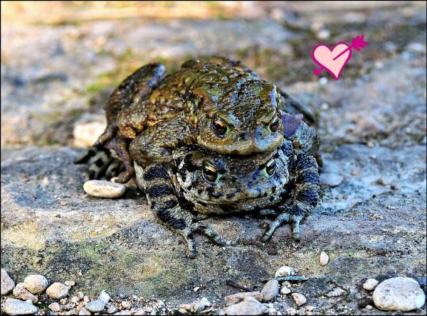 Love on the Rocks by niknakpaddywhack