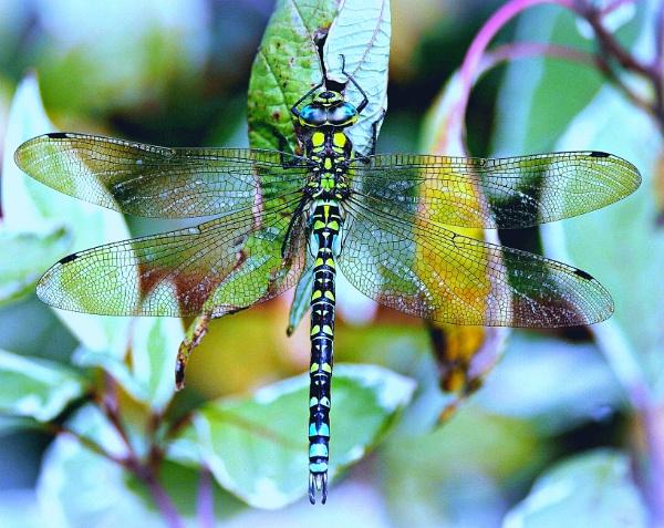 On Gossamer Wings. by niknakpaddywhack