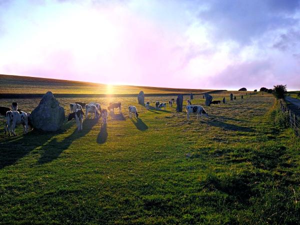 Cattle grazing among the famous  Avebury stones. by niknakpaddywhack