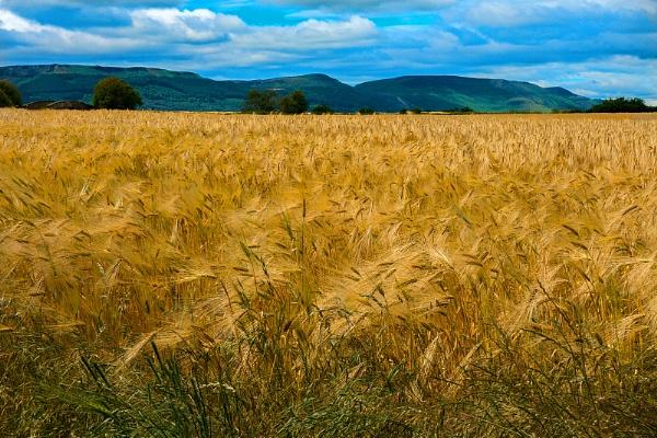Crops by terra