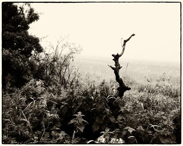 Taken in Isolation 72 by woolybill1