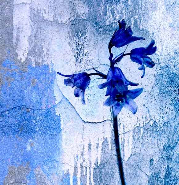 Blue by helenlinda