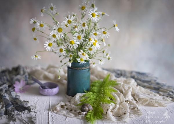 Daisies by Angi_Wallace