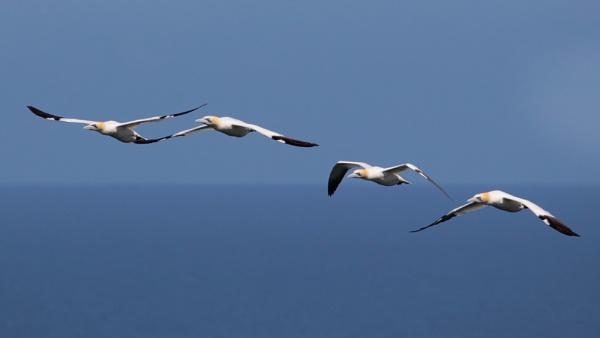 Formation Flying by altosaxman