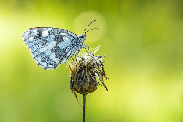 Early morning butterfly by olafo
