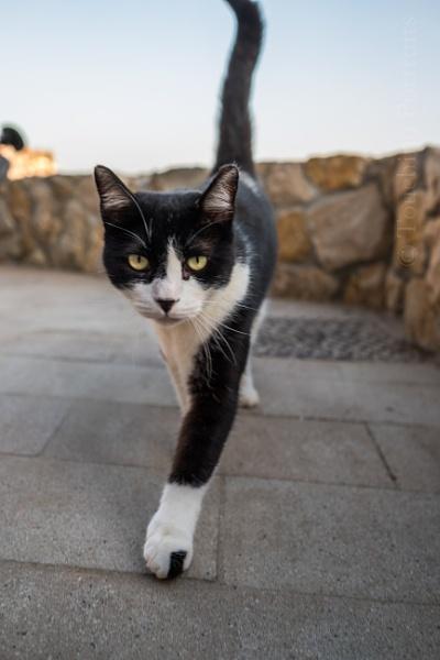 Cat Walk by touchingportraits