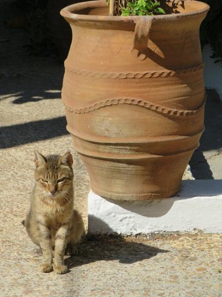 Cat and Urn by ddolfelin